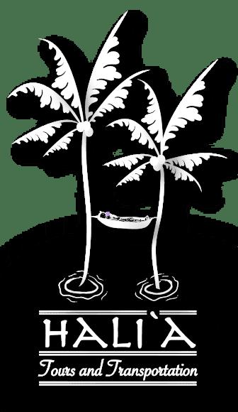 Contact Halia Tours today