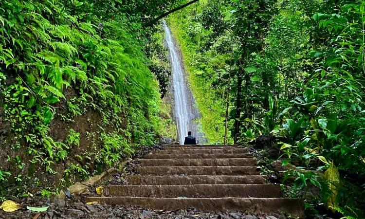 Manoa Waterfall Valley Hike