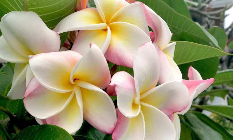 Flower in Botanical Garden