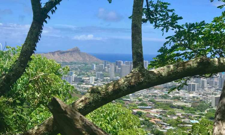 Scenic Honolulu Views