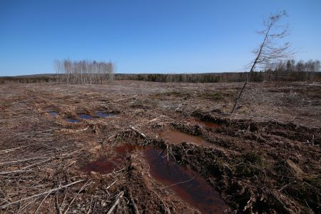 Big Marsh, Nova Scotia. This area was clearcut to feed Nova Scotia Power's biomass plant in Point Tupper, Cape Breton.  Photo Raymond Plourde