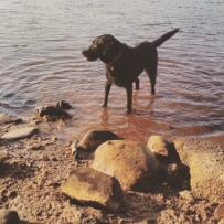 Long Lake off-leash dog-friendly