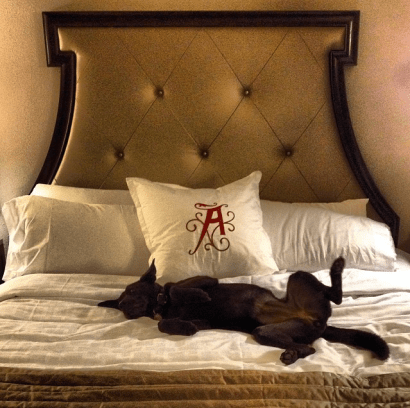 Dog-Friendly Adventures at the Algonquin Resort in Saint Andrews, New Brunswick
