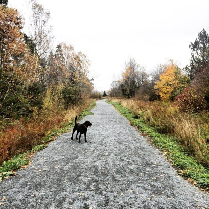 Bissett Lake Trail in Cole Harbour, Nova Scotia