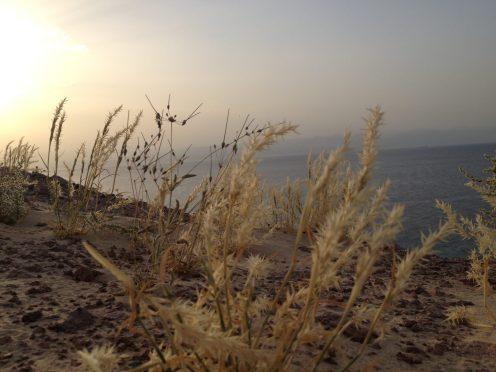 Basata, Sinai