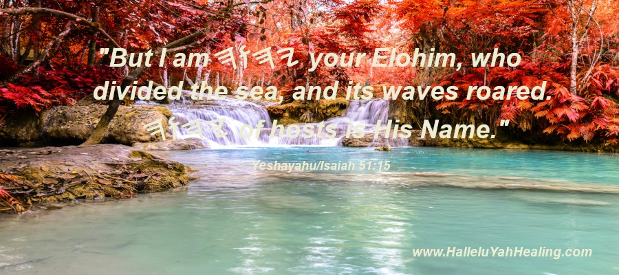 Phoenix's Testimony of Elohim and the Messiah and the Scripture Part 2