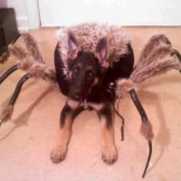 Epic Pet Costume: German Shepherd Spider