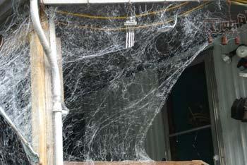 webcaster creaing spider webs