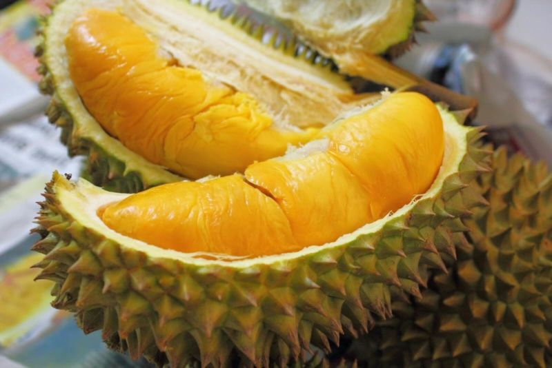 Jual Bibit Durian Bawor