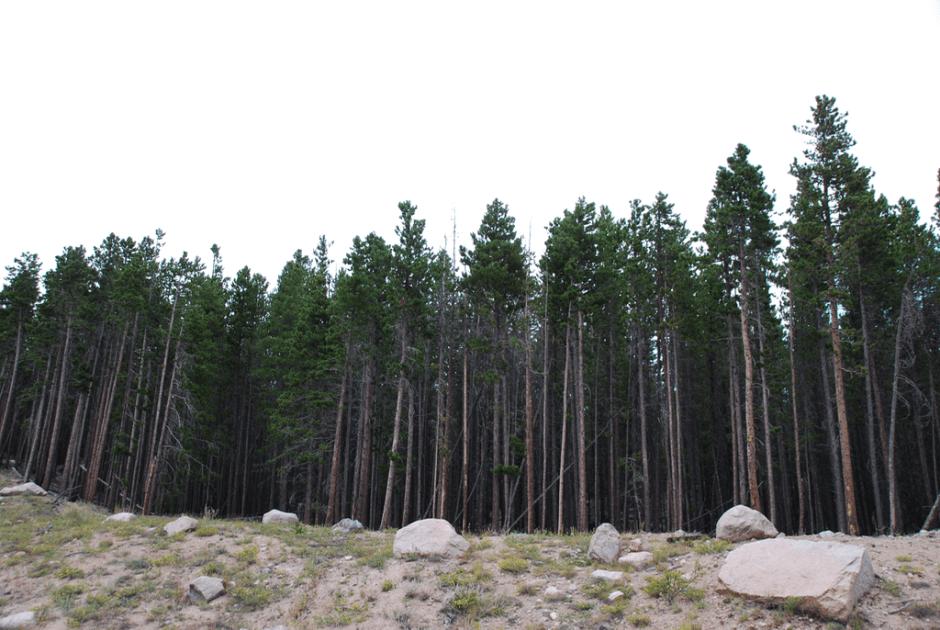 Colorado - 4