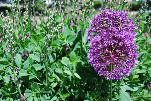 Teal & Lilacs - 1