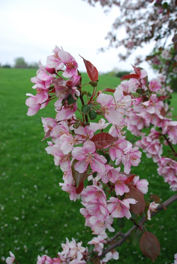 springing into may - 8