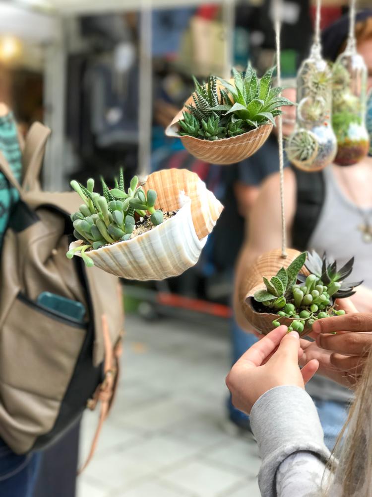plants at the saturday market