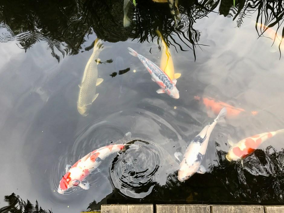 that pond life