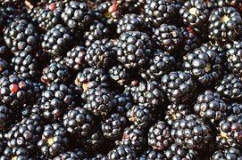 blackberries-888228__180