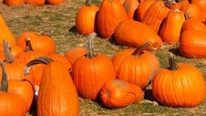 pumpkin-995413__180