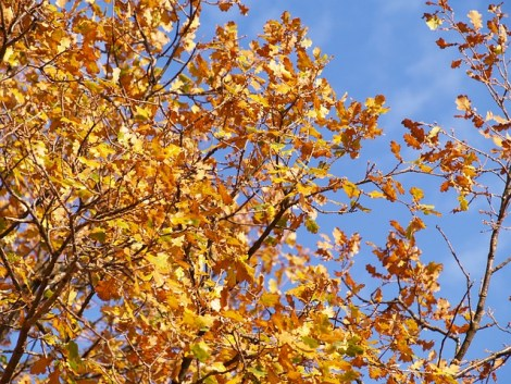 autumn-476495_640