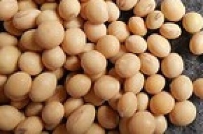 soybeans-182295__180