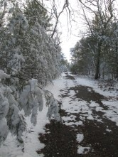 Road to firetower
