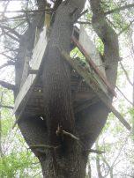 DPW lumber