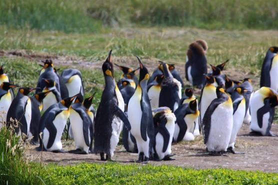 penguins-best