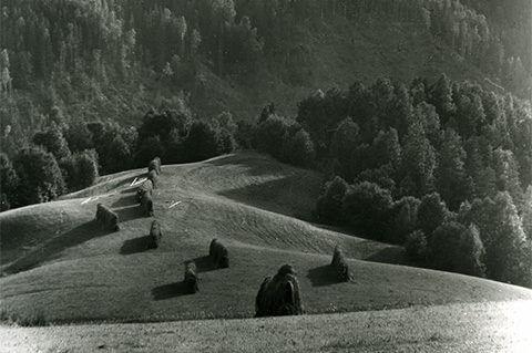En sommarbild föreställande höhässjor tagen av Hilding Mickelsson.