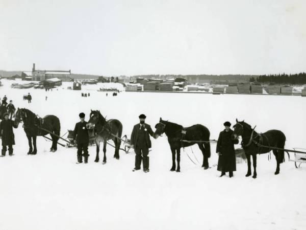 Fyra förspända hästar står på rad på ett snöigt underlag.