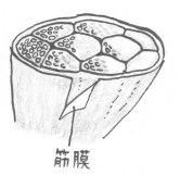 img_menu_kinmaku_2