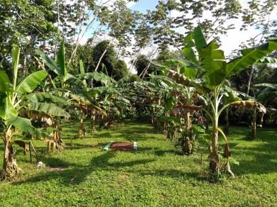 BelizeGVP5