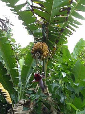 BelizeGVP45