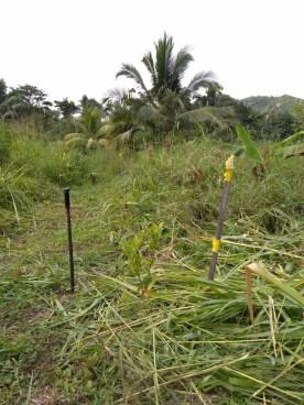 BelizeHom22