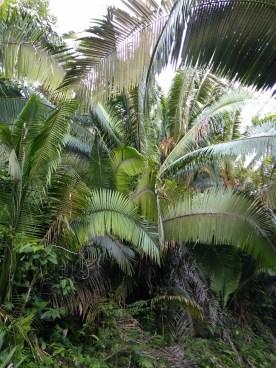 BelizeGVP50