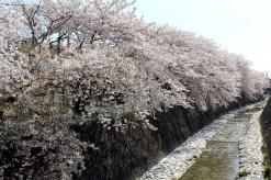 長坂緑地(浜松市中区富塚町)