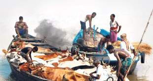 Cattle smuggled to Bangladesh