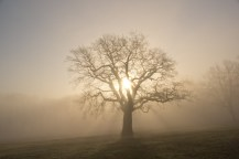 Baum im Jenischpark