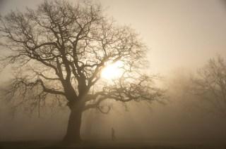 Baum im Jenischpark mit Jogger