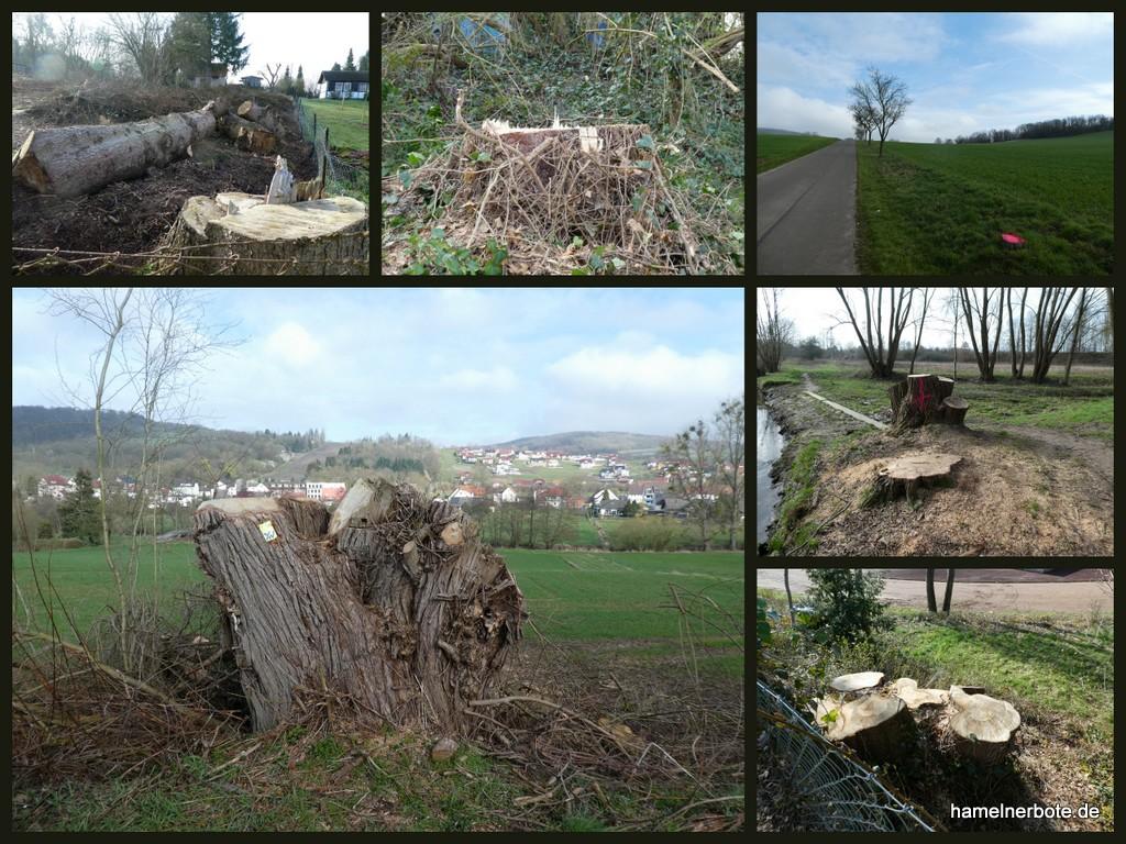 Baumfällungen (2) in Hameln – Impressionen
