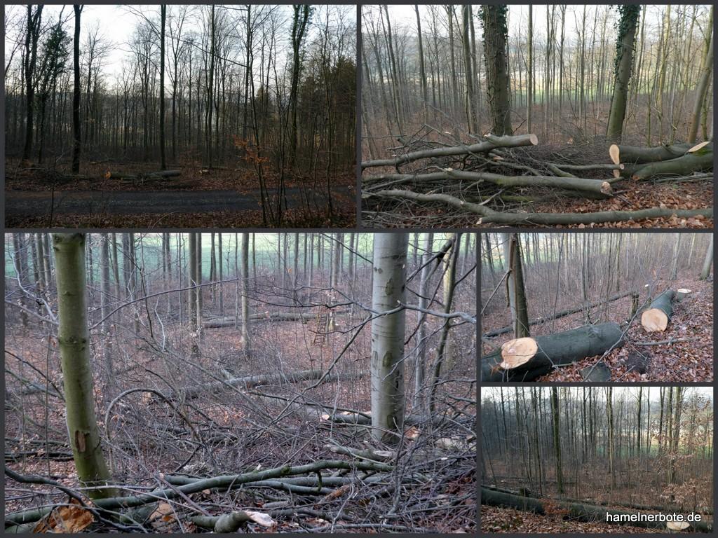 Baumfällungen im Waldgebiet Schweineberg (Fotosammlung Feb./März 2019)