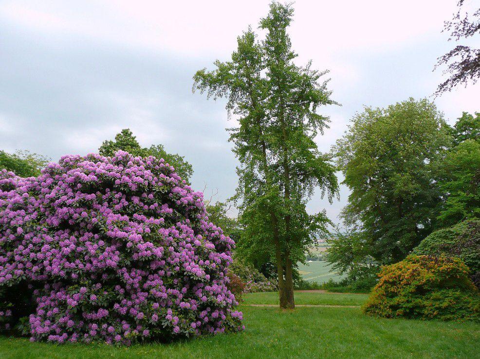 Veranstaltungshinweis: Themenführung »Das Gartendenkmal Ohrbergpark« am (Freitag) 24. Mai 2019