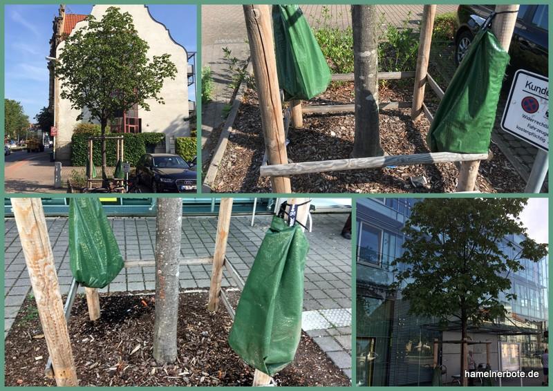 Baumschutz durch Wässerung