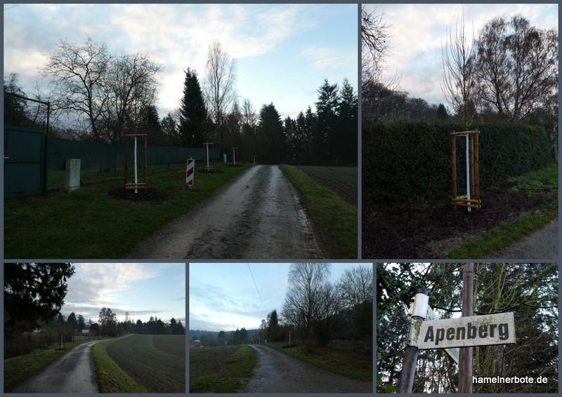 Neue Bäume für den Apenberg – Update 26.12.2019