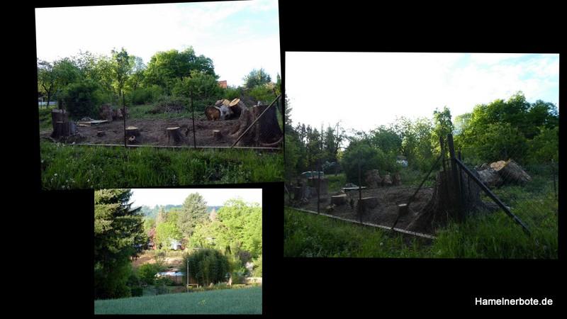 Rege Rodungsarbeiten – Einsiedlerbach