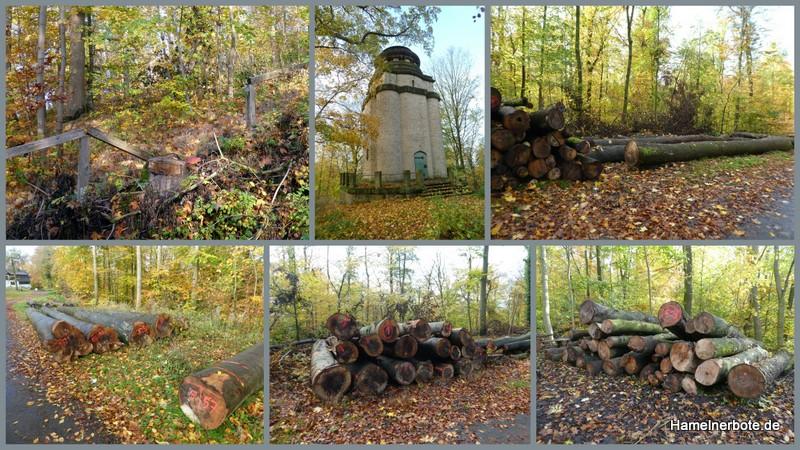 Baumfällungen Knabenburg – Zufahrt Bismarckturm