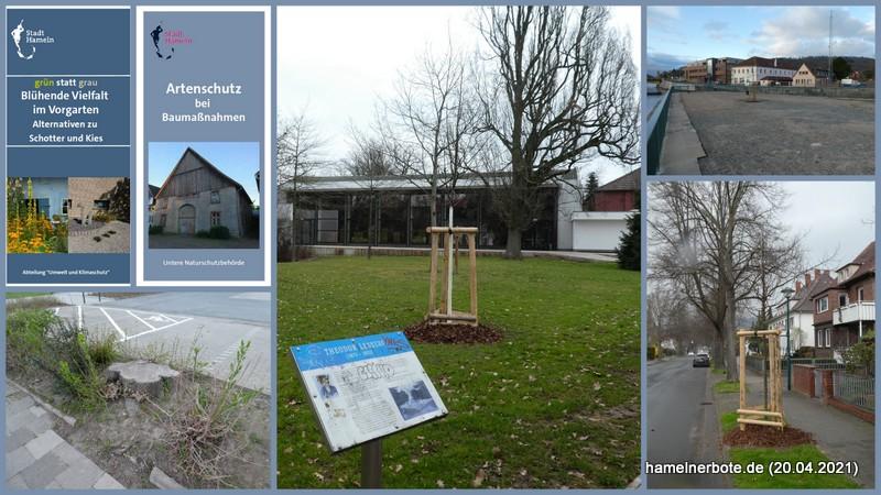 Nachgefragt: Baumschutz(richtlinie) der Stadt Hameln: Antworten der Verwaltung: