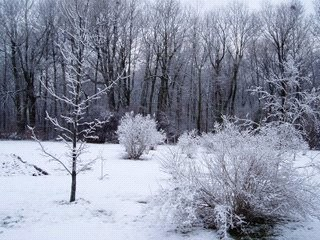 Ask Turf King Lawn Care- Is too much snow harmful to my lawn?