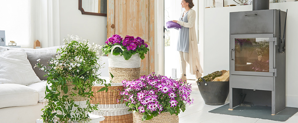 Winter Bloomers Houseplants Of The Month For February Hamiplant