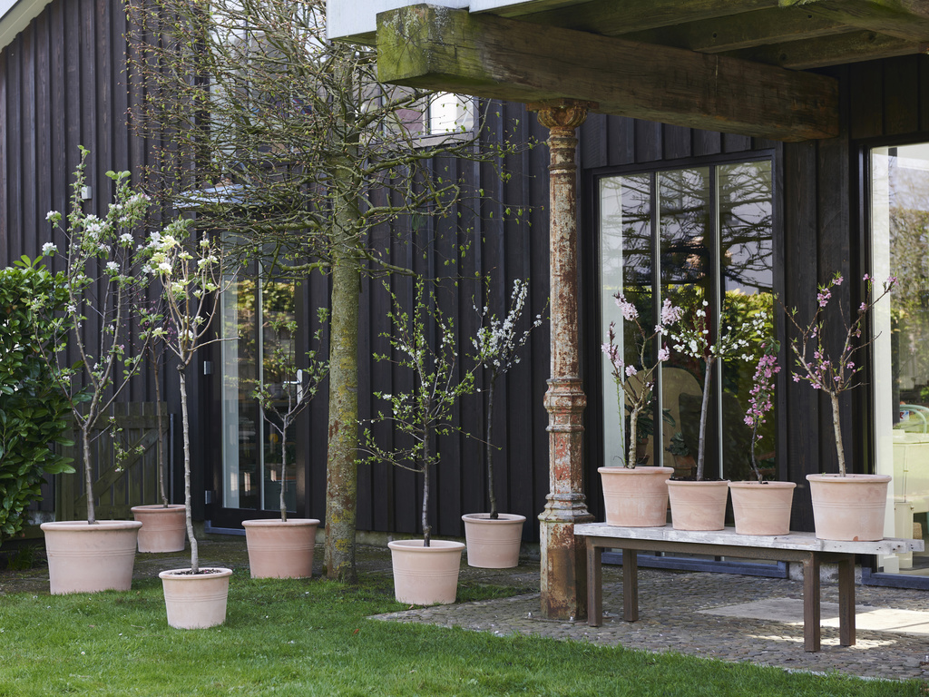 Blossom Trees: garden plants of the month for March