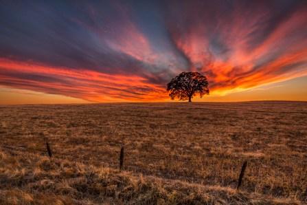 My Zen Tree by Greg Mitchell.
