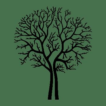 Invitation – «A la sainte catherine, tout bois prend racine»