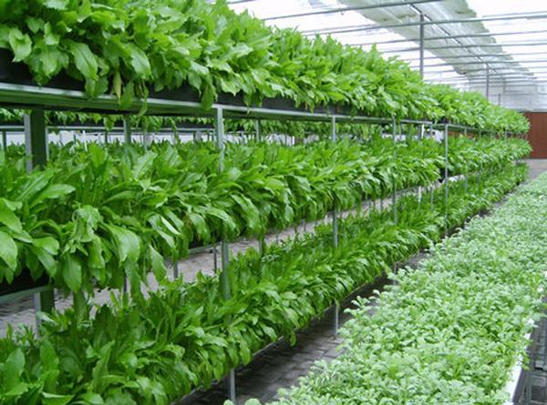 pertanian organi